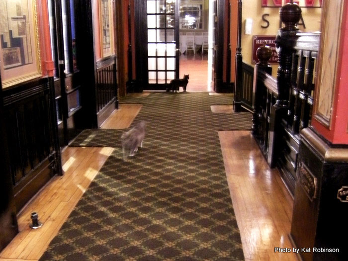 The Crescent Hotel's resident cats